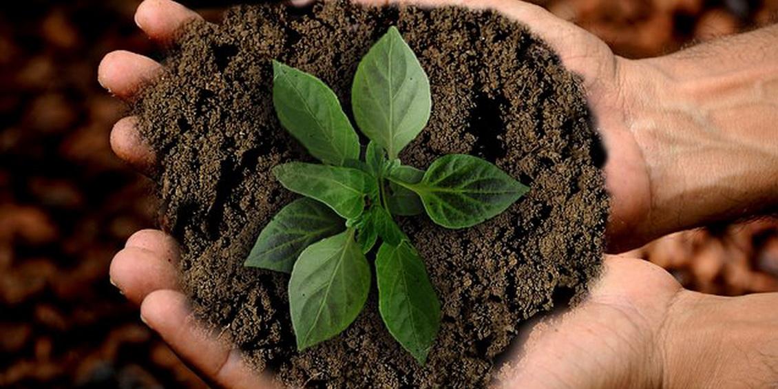 Hände halten Erde in der eine Pflanze wächst